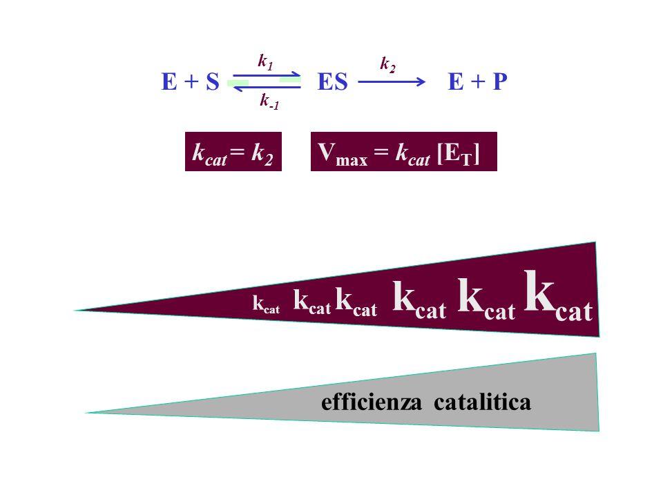 kcat kcat kcat kcat kcat E + S ES E + P kcat = k2 Vmax = kcat [ET]